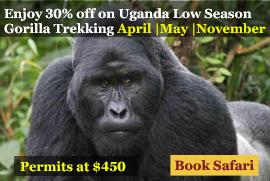 low season gorilla trekking offer