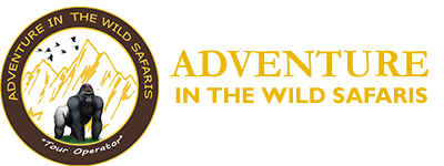 Adventure In The Wild Safaris logo