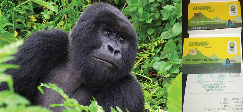How to Book Gorilla trekking Permits